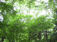 郊外の緑に思うこと