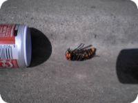 スズメバチはちょっと怖いけど