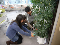 植物の生命力