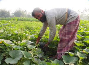バングラデシュ有機農業