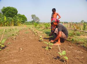 持続可能な農業を教える