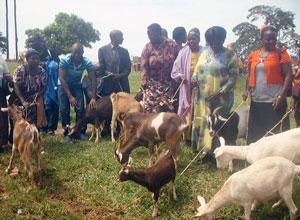 ウガンダ家畜事業