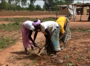 農作業に励む